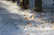 Turnips fell from the turnip tree!
