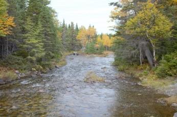 Brook or River