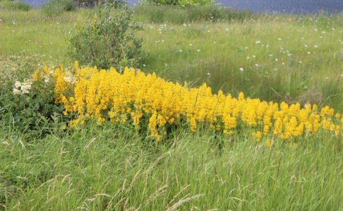 Lomond…..Wildflowers & BeautyEverywhere
