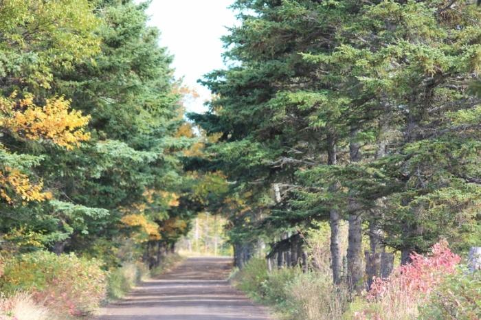 Bight Road