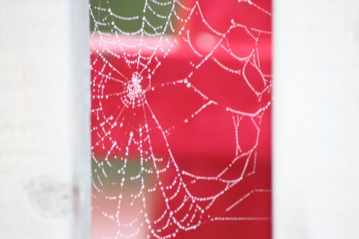 Web in Red
