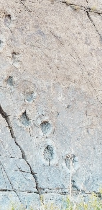 Dinosaur Tracks Foothills Hiking