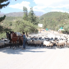 Coming down from the Termas del Flaco area