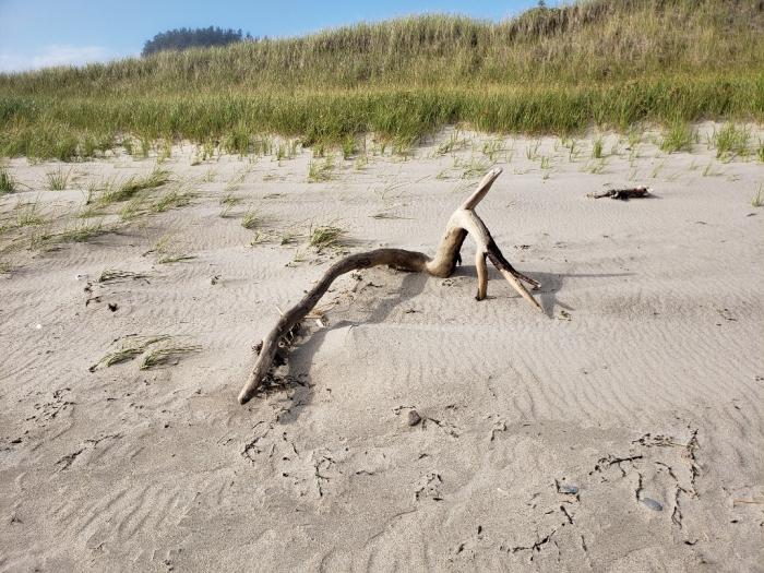 Free style driftwood art