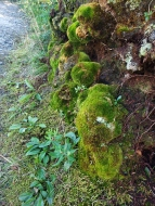 Moss on an outcrop